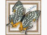 Бабочка из бисера вышивка на пластиковой основе Цирестис Нивея (BGP039)