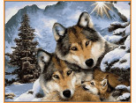 NB1023R Картина по номерам Семья волков (в раме) Babylon