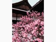 Природа и пейзаж: картины без коробки Японская вишня