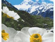 Природа и пейзаж: картины без коробки Альпийские маки