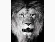 Животные: картины без коробки Лев