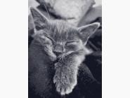 Коты и собаки: картины без коробки Кошачья благодарность