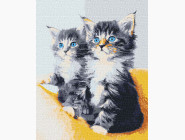 Коты и собаки: картины без коробки Голубоглазые котята