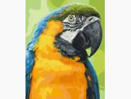 Птицы и бабочки картины по номерам Попугай Ара