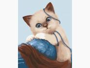 Коты и собаки Игривый котенок