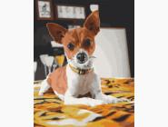 Коты и собаки: картины без коробки Чихуахуа