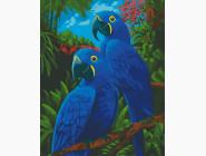 Птицы и бабочки: картины без коробки Голубые ары