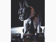 Коты и собаки: картины без коробки Застенчивый фотограф