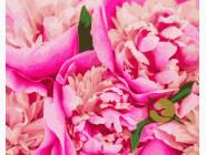 Букеты и натюрморты: картины без коробки Розовые пионы