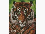 Животные и жители моря Непобедимый тигр