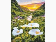 Пейзаж и природа Цветы в горах