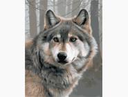 Животные и рыбки Одинокий волк