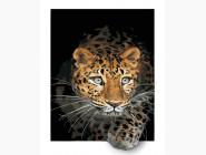 Животные и рыбки Ягуар