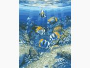 Животные и рыбки Подводный мир