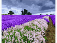 Цветы, натюрморты, букеты Поле лаванды