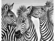 Животные и рыбки Три зебры