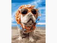 Коты и собаки Пёс на пляже