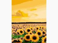 Цветы, натюрморты, букеты Поле подсолнухов