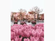 Цветы, натюрморты, букеты Сезон тюльпанов