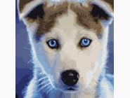 Коты и собаки: картины без коробки Голубоглазый пёсик