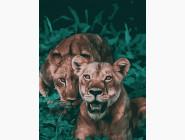 Животные и рыбки Хищные джунгли
