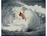 Новинки алмазной вышивки Лебедь