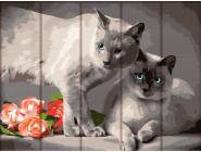 Коты и собаки Сиамские коты