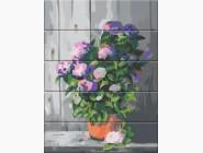 Цветы, натюрморты, букеты Цветы в горшочке
