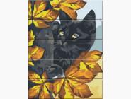 Коты и собаки Черный кот
