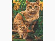 Коты и собаки Рыжие котики