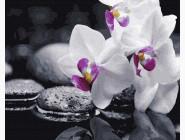 Букеты и натюрморты: картины без коробки Орхидея