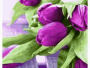 Букеты и натюрморты: картины без коробки Пурпурные тюльпаны