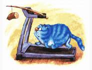 Кот спортсмен