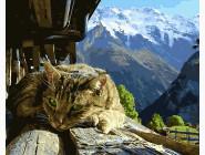 Коты и собаки: картины без коробки Горный кот