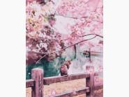 Коты и собаки Котик в цветущей сакуре