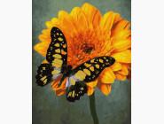 Букеты и натюрморты: картины без коробки Жёлтый махаон