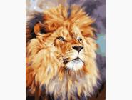 Животные: картины без коробки Лев-царь зверей
