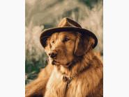 Коты и собаки: картины без коробки Собака в шляпе