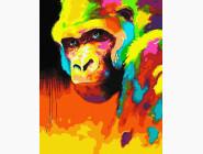 Животные и рыбки Орангутанг в красках