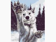 Животные: картины без коробки Снежный хаски