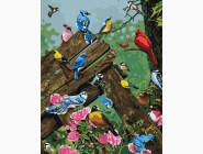 Птицы и бабочки картины по номерам Разноцветные птички
