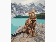 Коты и собаки: картины без коробки Кот на берегу