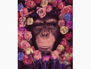 Животные: картины без коробки Шимпанзе