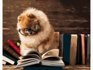 Коты и собаки: картины без коробки Шпиц