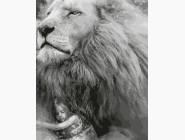Животные и рыбки Под защитой льва