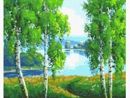 Пейзаж и природа Березовая роща