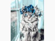 Коты и собаки: картины без коробки Голубые глаза