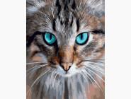 Коты и собаки: картины без коробки Кошачья грация