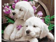 Коты и собаки: картины без коробки Милые щенята