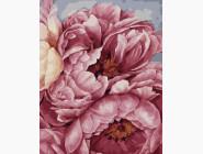 Букеты и натюрморты: картины без коробки Цветения пионов